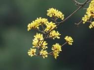 봄꽃과 새, 각종 봄 축제가 전국에서 열리고 있는 지금 점점 그 주인공들의 자태가 익어간다.