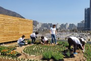 양산부산대학병원내 RMHC 힐링센타 옥상정원 가꾸기