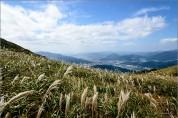 """주말오후 시인과의 산책/양산시인 이신남의 """"환상-천성산 억새"""""""