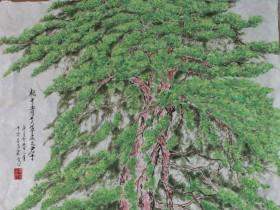 """설파, 안창수 화백의 """"소나무"""" - 가로74cm x 세로144cm 화선지에 수묵채색"""